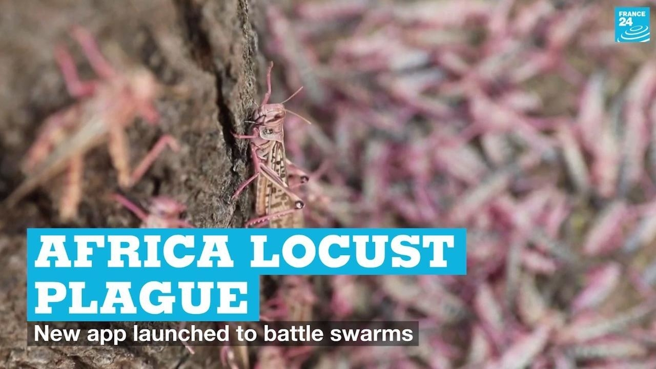 Photo of Africa locust plague: New app launched to battle swarms