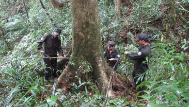 Photo of Use pandemic to protect forests, WWF urges consumers, politicians