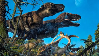 Photo of Scientists in China discover two new massive dinosaur species as big as blue whales